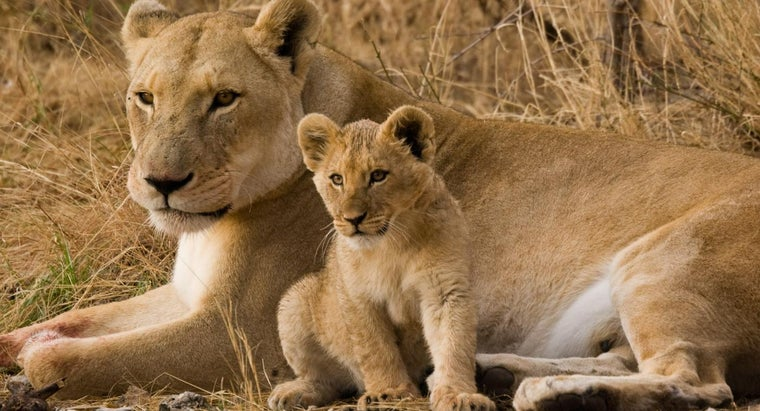 How Do Female Animals Protect Their Offspring?
