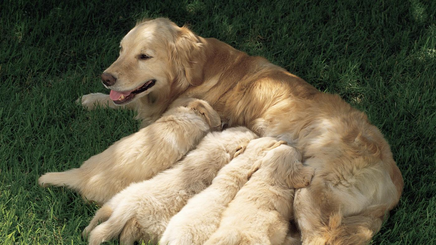 how many litters can a dog have in a year