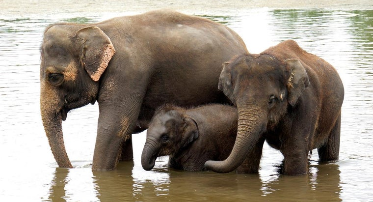 What Are Female Elephants Called? | Reference.com