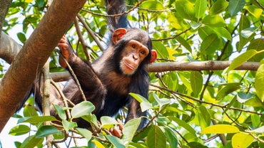 What Is a Female Monkey Called?