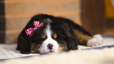 What Are Some Female Puppy Names?