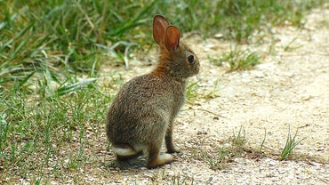 What Is a Female Rabbit Called?