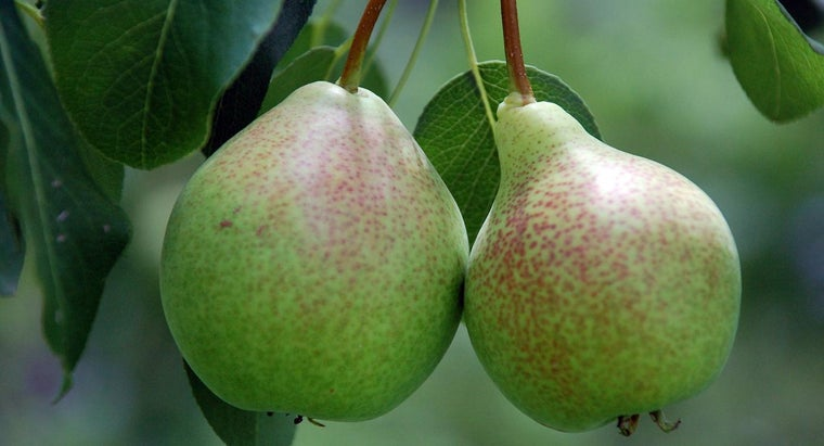 How Do You Know When to Fertilize Fruit Trees?