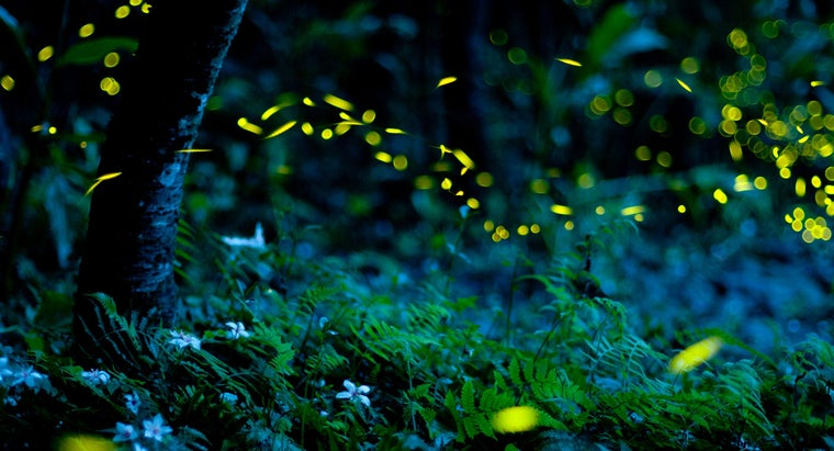 How Do Fireflies Glow?
