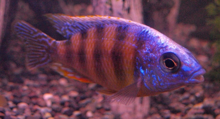 How Are Fish Adapted to Water?