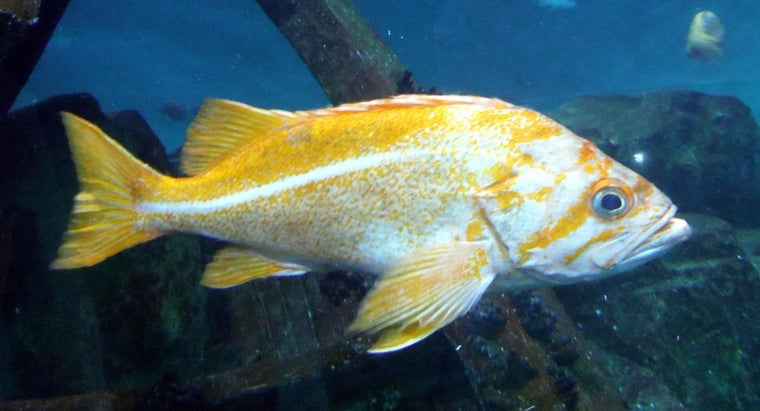 Are Fish Cold-Blooded?