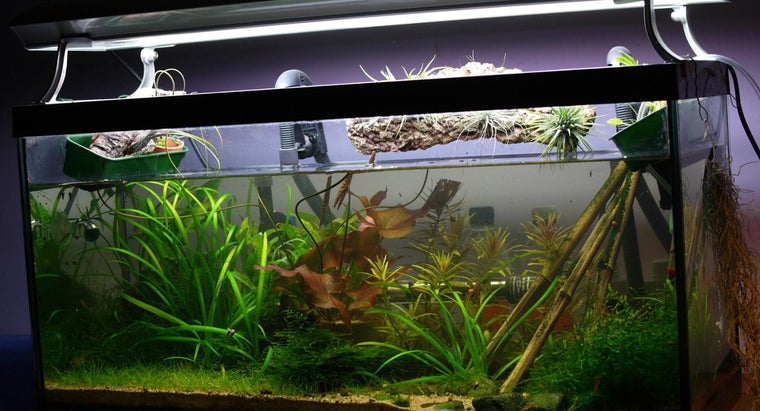 What Is the Best Fish Tank Filter?