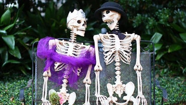 What Are the Five Functions of the Skeleton?