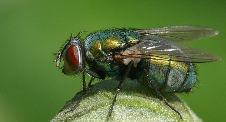 Where Do Flies Live During Winter?