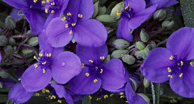 Which Flower Blooms for One Day?