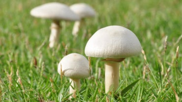Which Food Group Do Mushrooms Fit Into?
