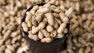 What Food Group Is the Peanut In?