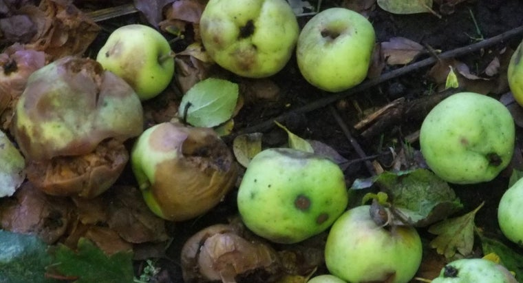 Why Does Food Rot?