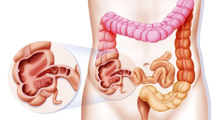 How Does Food Travel Through the Digestive System?