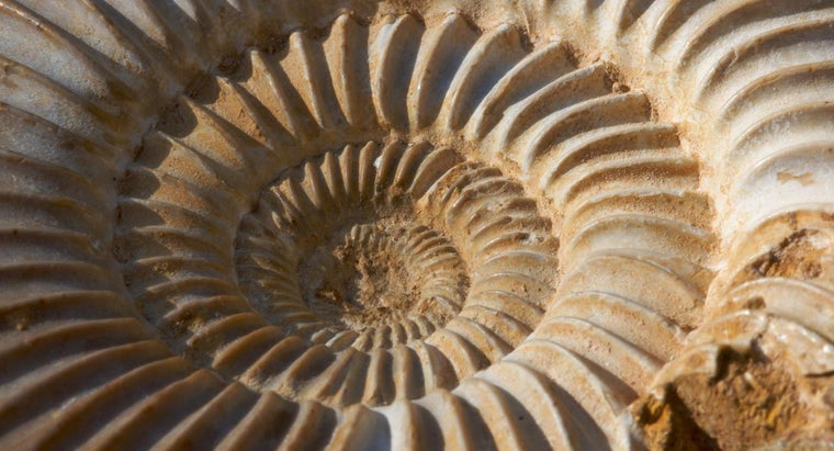 What Fossil Looks Like a Spiral or a Ram's Horn?
