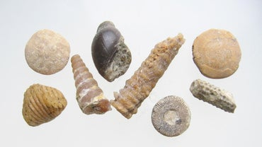 Why Is the Fossil Record Incomplete?
