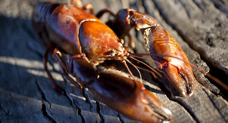 What Do Freshwater Crawdads Eat?