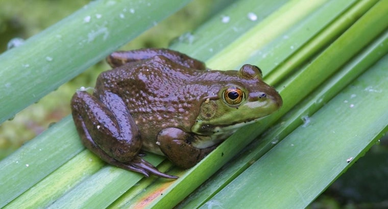 Does a Frog Have a Backbone?