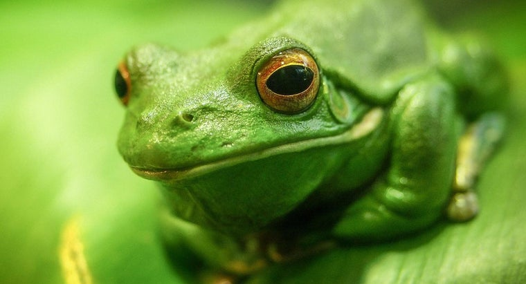 What Does a Frog Symbolize?