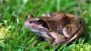 How Do Frogs Protect Themselves From Predators?