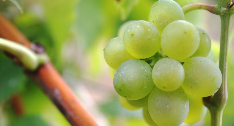 What Fruits Grow on Vines?