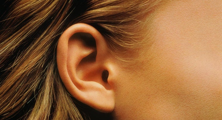 What Is the Function of the Cochlea?