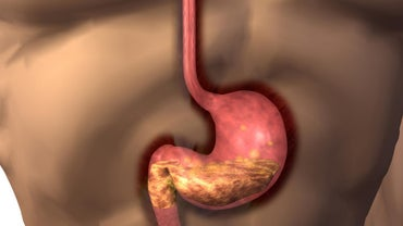 What Is the Function of the Human Stomach?