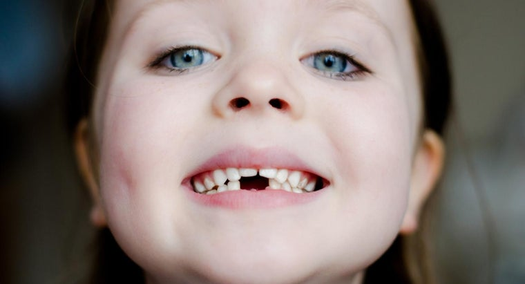 What Is the Function of a Incisor Tooth?