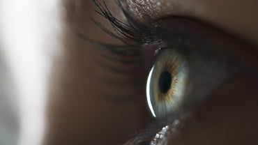 What Is the Function of the Retina?