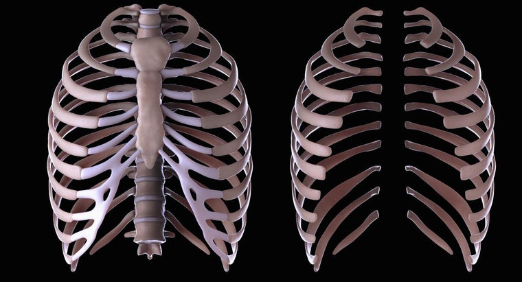 What Is The Function Of The Rib Cage Reference