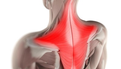 What Is the Function of the Trapezius Muscle?