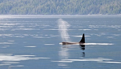 What Are the Functions of Dorsal Fins?