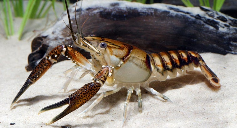 What Are the Functions of Green Glands in Crayfish?