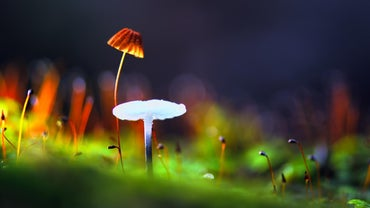 How Are Fungi and Plants Similar?