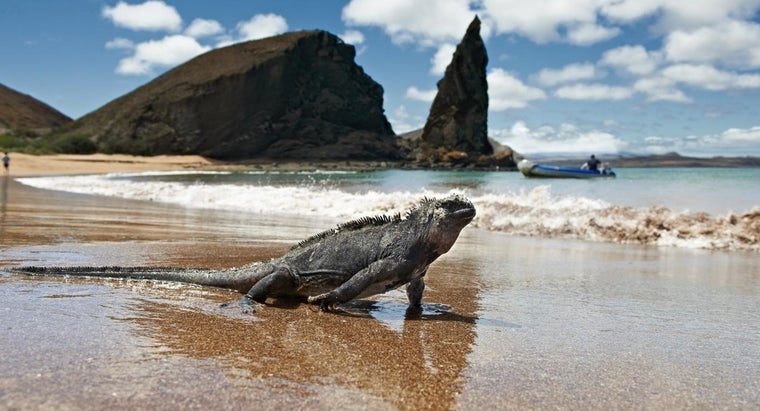 Why Are the Galapagos Islands Famous?