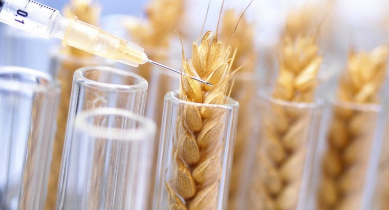 Are Genetically Modified Foods Bad for Overall Kidney Health?