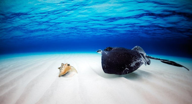 What Does a Giant Stingray Eat?