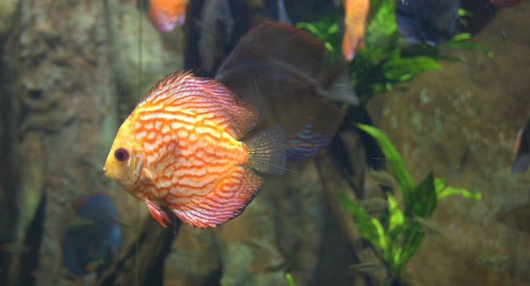 What Are Some Girl Fish Names?