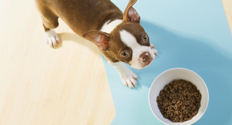 What Are Some Gluten-Free Dog Food Brands?