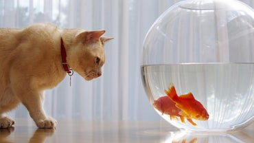 Why Do Goldfish Sink to the Bottom of the Tank?