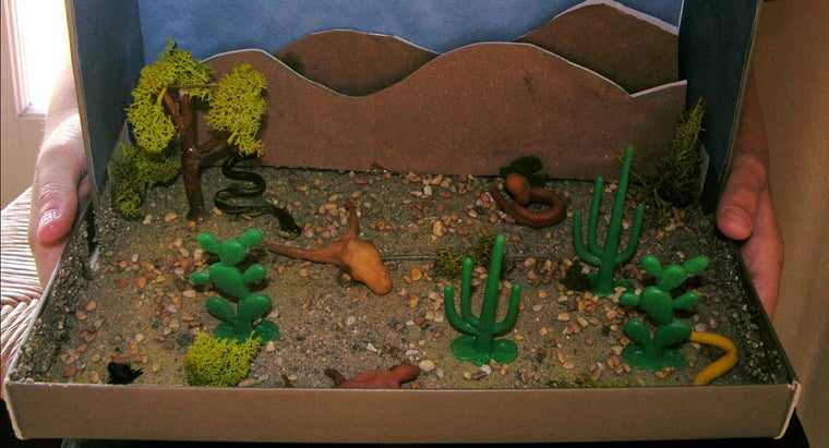 What Is a Good Desert Habitat Project for Kids?