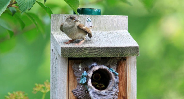 What Are Good Places to Sell Wooden Bird Houses Online?