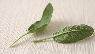What Is a Good Substitute for Sage?