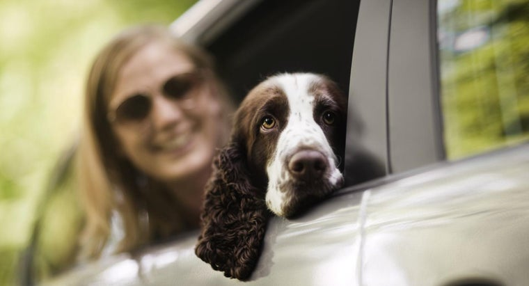 Are There GPS Chips for Dogs?
