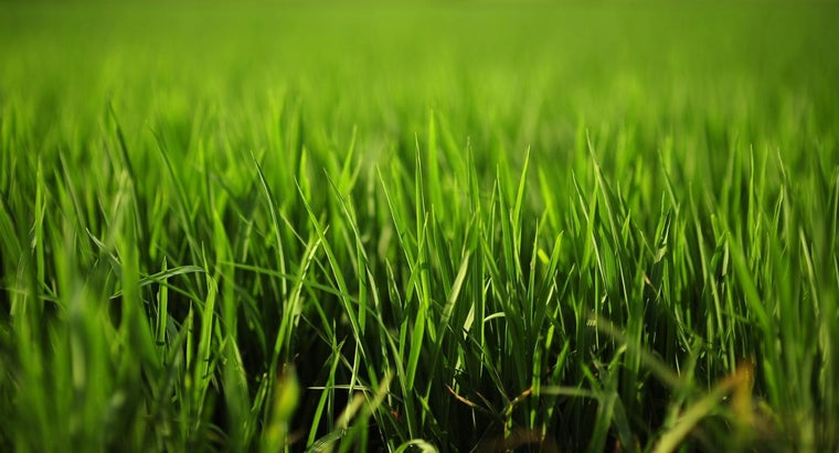 Why Does Grass Make You Itch?