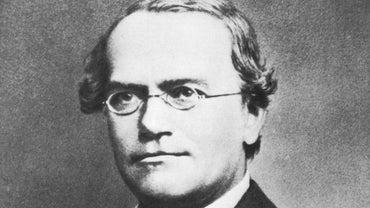 Why Is Gregor Mendel Called the Father of Genetics?