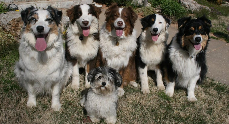 What Is a Group of Dogs Called?