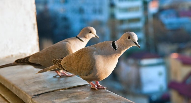 What Is a Group of Doves Called?