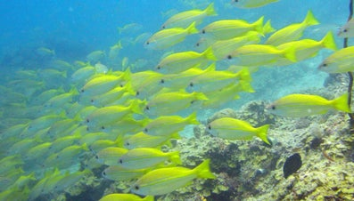 What Is a Group of Fish Called?