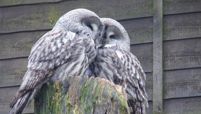 What Is a Group of Owls Called?